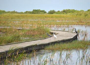 Sea Rim State Park Birding 1