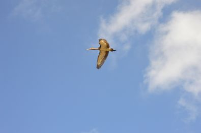 Sea Rim State Park birding
