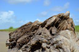 Sea Rim State Park driftwood