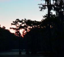 Caddo Lake first light