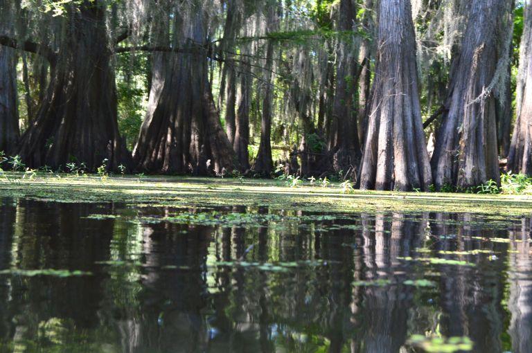 Caddo Lake reflection