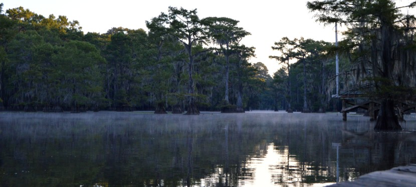 Caddo Lake: Take a moment