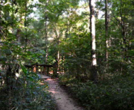 Caddo lake trail