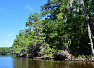 Caddo Lake turning