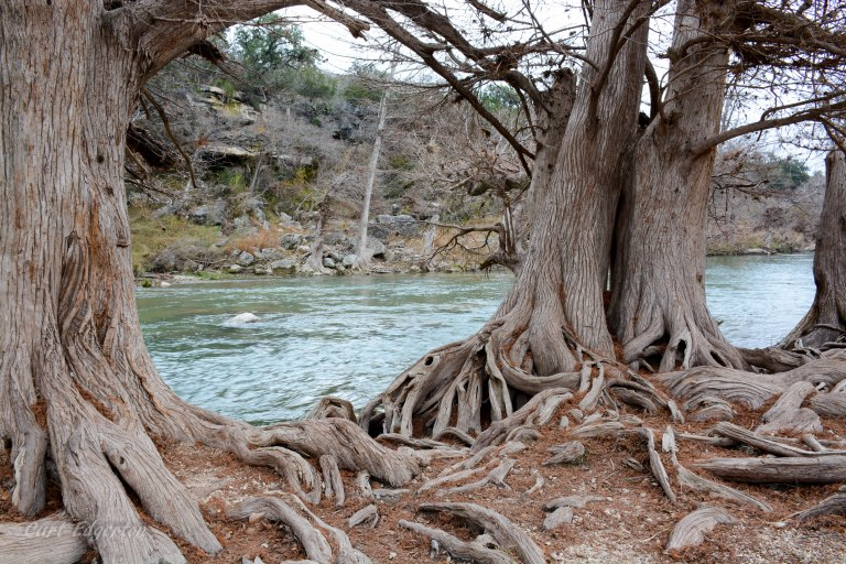 Guadalupe river state park (11)