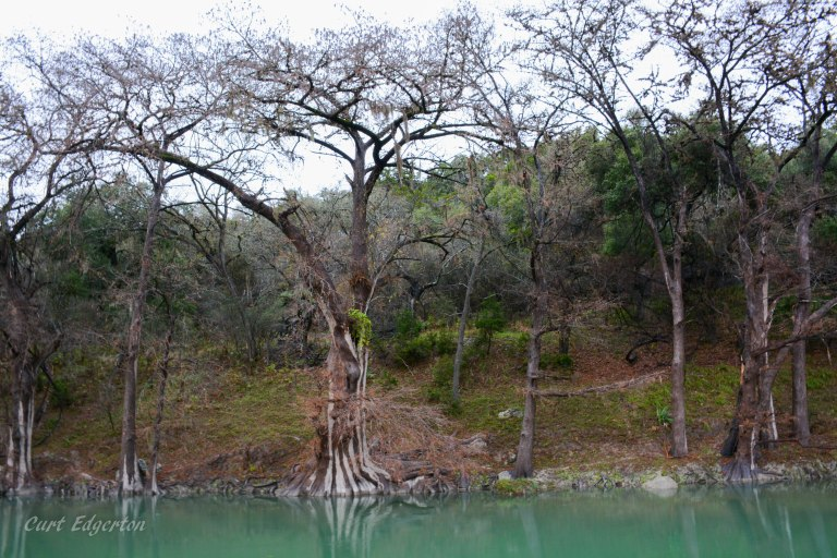 Guadalupe river state park (7)