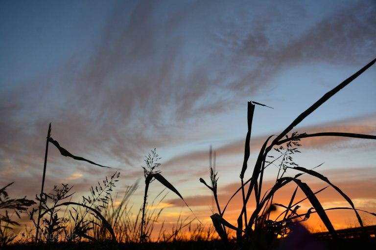beaumont-texas-cattail-marsh