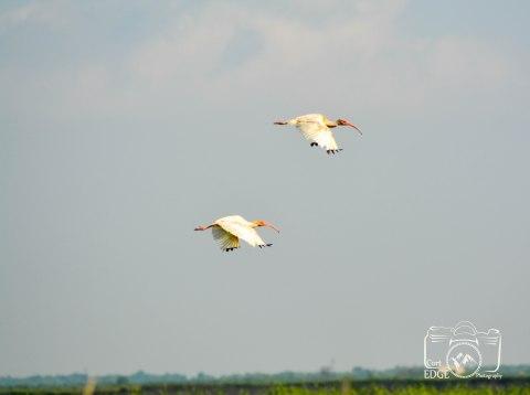 anahuac-wildlife-refuge-3