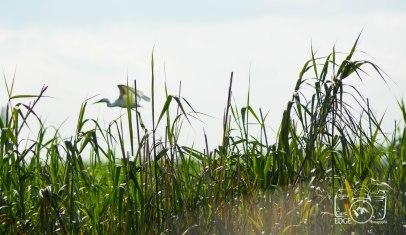 anahuac-wildlife-refuge-8