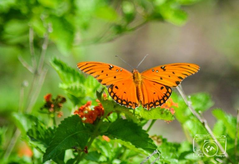 butterfly-20