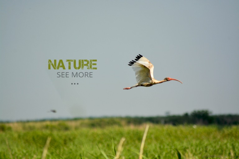 nature 3