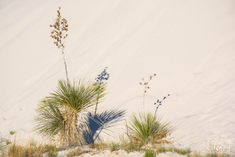 white sands (3)