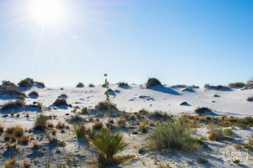 white sands (8)